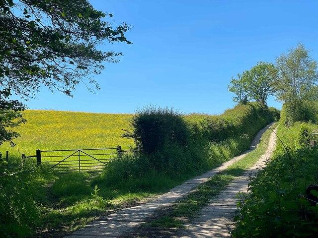 Track and bridleway towards Merrieweathers