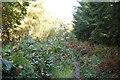 TQ8523 : Footpath, Bixley Wood by N Chadwick