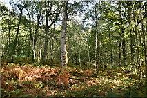 TQ8622 : Flatroper's Wood by N Chadwick