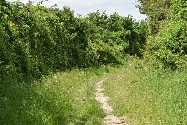 Track between high hedges near Goss Hill