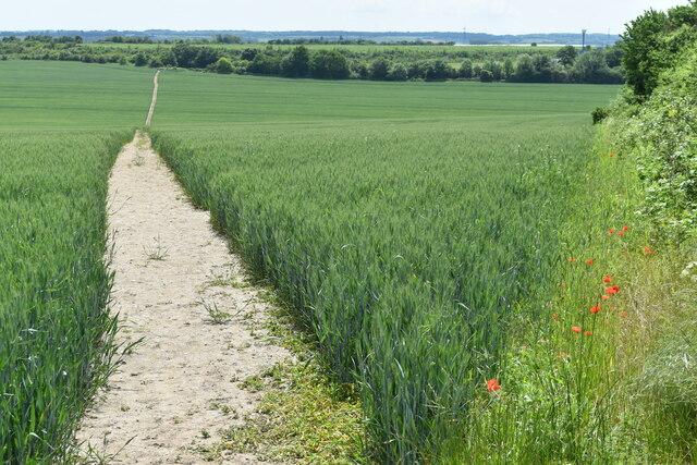 Path from corner of field near Hawley