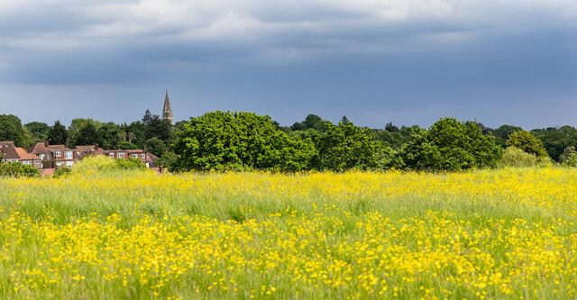 Buttercup Field, Merryhills Way, Enfield by Christine Matthews