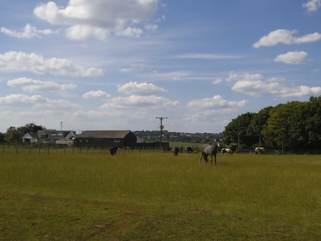 Horses in a field off Whitehall Road