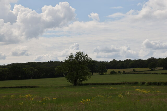 Field, Merryhills Way, Enfield