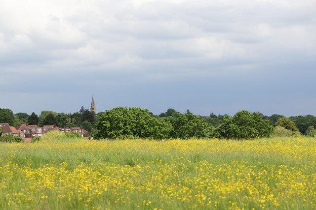 Field, Merryhills Way, Enfield by Christine Matthews