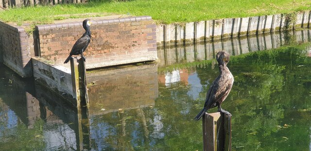 New River, Palmers Green