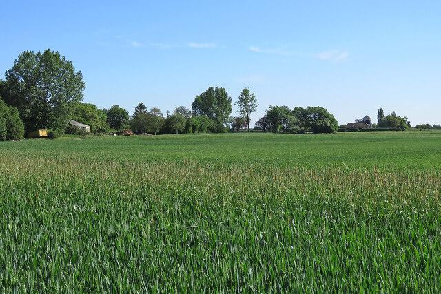 Little Wilbraham: near Hawk Mill Farm