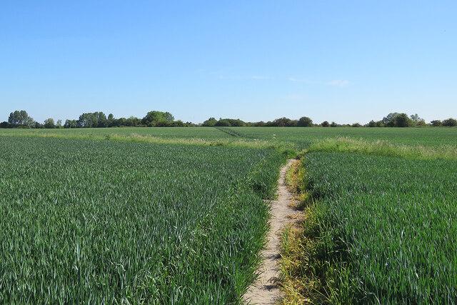 Through wheatfields to Little Wilbraham