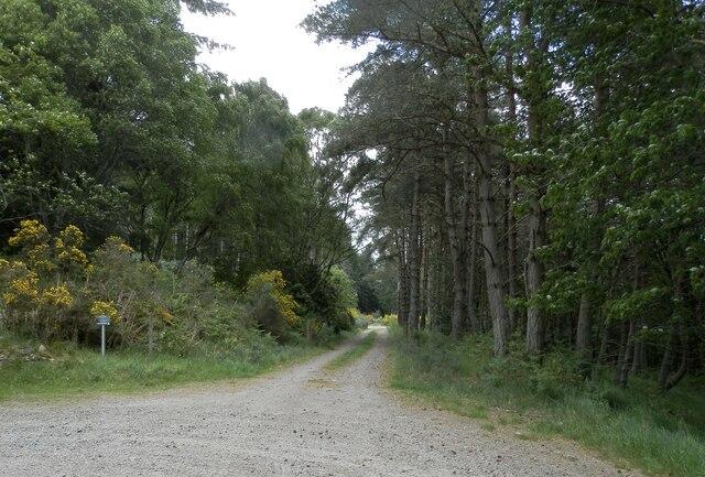 Forest track near Middleton by Douglas Nelson