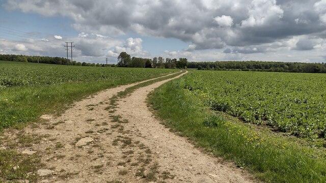 Bridleway nearing Dustfield Farm