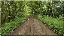 SP3826 : Green Lane track by Shaun Ferguson