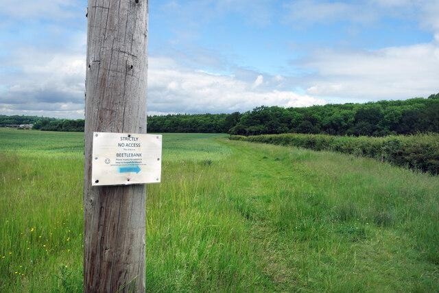 No Access, Beetlebank