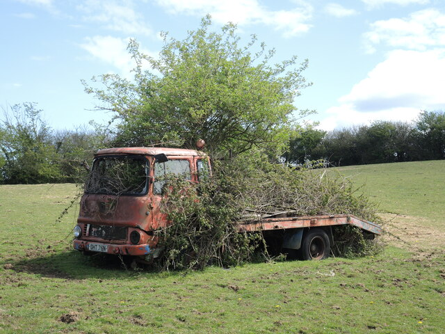 A flatbed in a tree