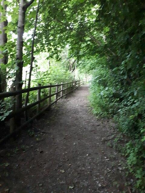 Riverside footpath near Cardigan Fields