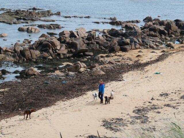 Professional dog-walker on the beach at Craigewan