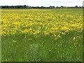 TL2471 : Port Holme flood meadow near Godmanchester by Richard Humphrey