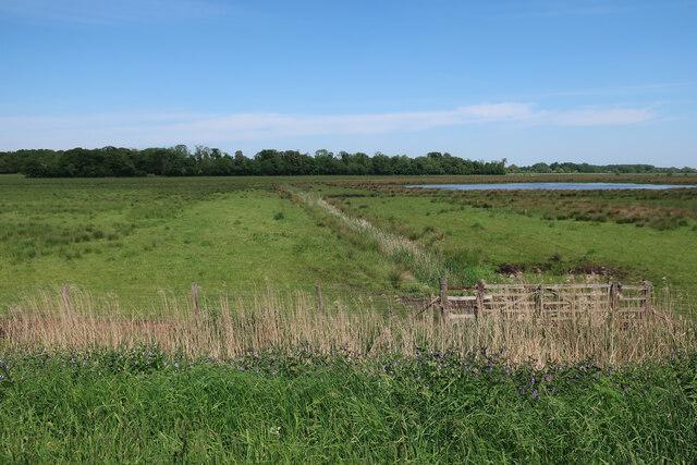 Wet grassland north of the Wissey