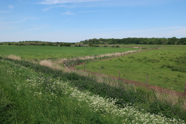 Fields north of the Wissey