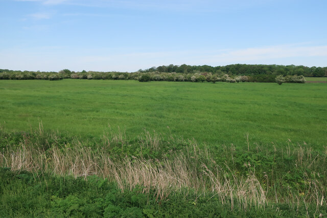 Field north of the River Wissey