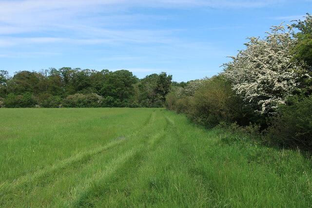 Path towards Wretton Fen