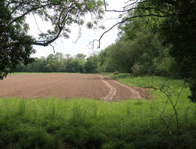 Field by Three Acre Belt