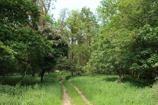 Track into Wretton Fen