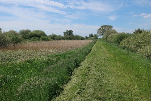 Washland by the Wissey