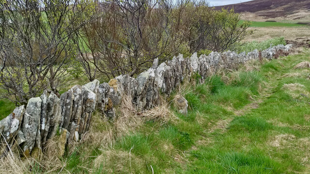 Dry-stone wall, Cuween
