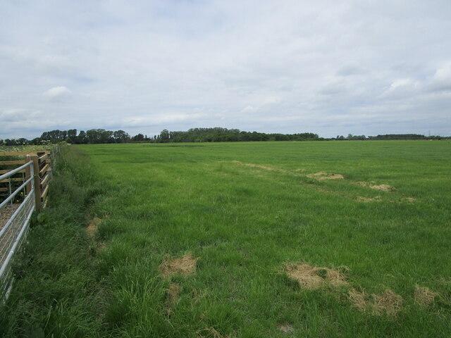 Grassland off Frog's Abbey Gate