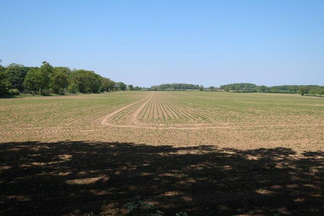 Field near Wolterton Park