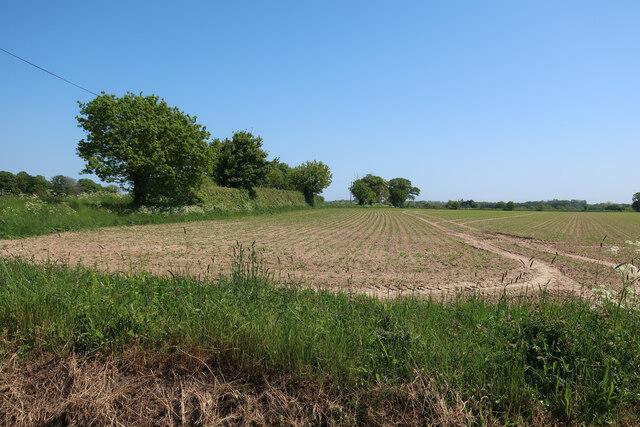 Field by Aldborough Road
