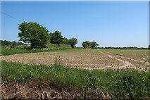 TG1633 : Field by Aldborough Road by Hugh Venables