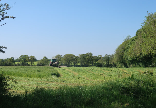 Silage cutting by Copland's Wood