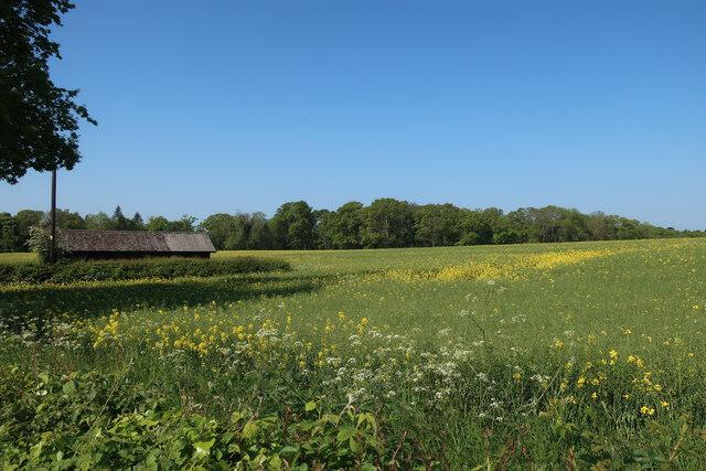Field by Brickkiln Lane