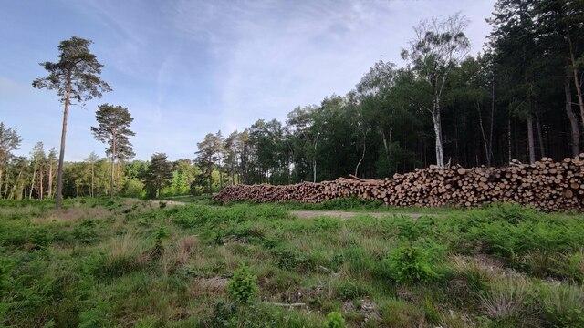 Tree harvesting close to Gormoor Farm