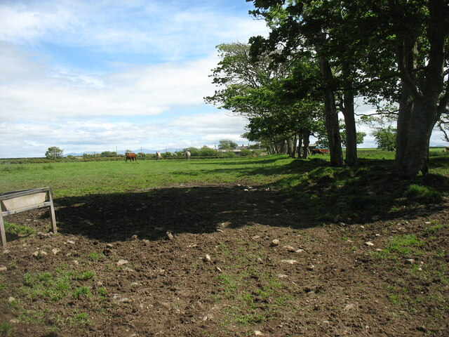 Fields at Bodgedwydd