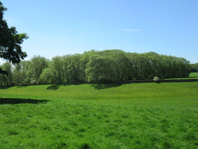 Parlourpiece Plantation in summer