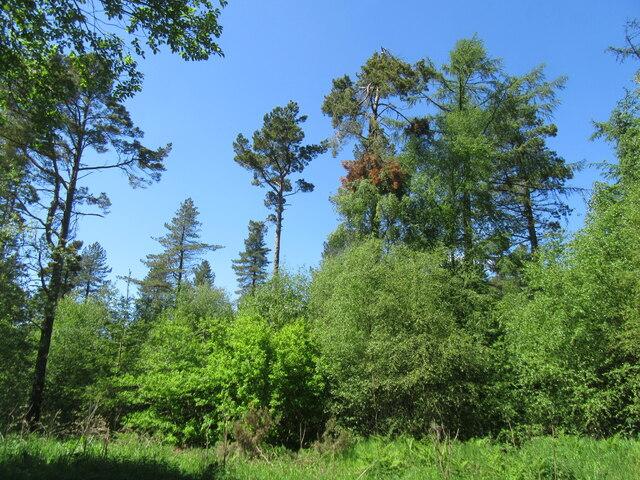 Summer in Wykeham Forest