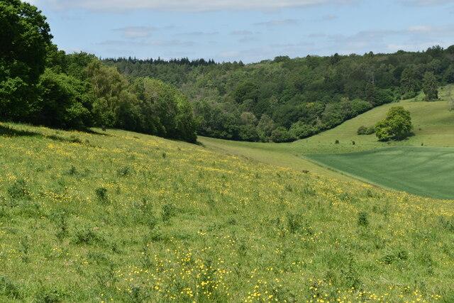 Steep valley side below Grovely Wood