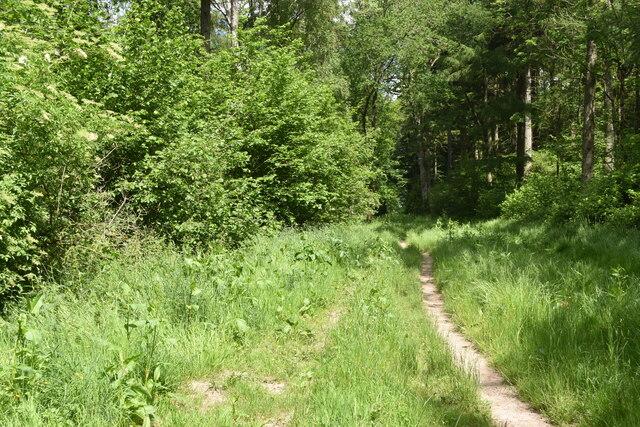 Path in Heath Wood