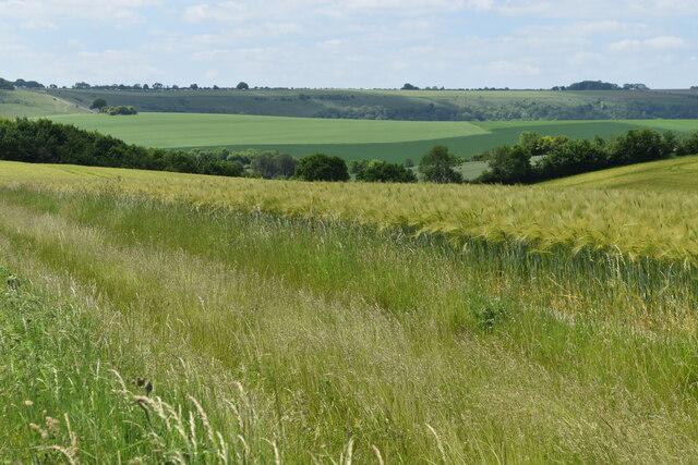 Farmland at North Burcombe