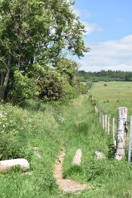 Start of path to Grovely Wood