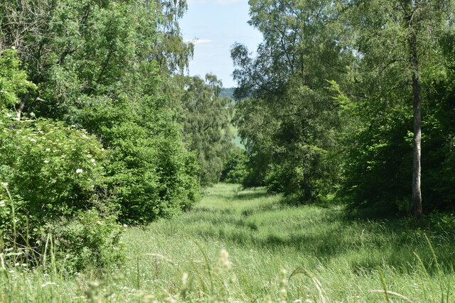 Grassy swathe through the woods at Hadden