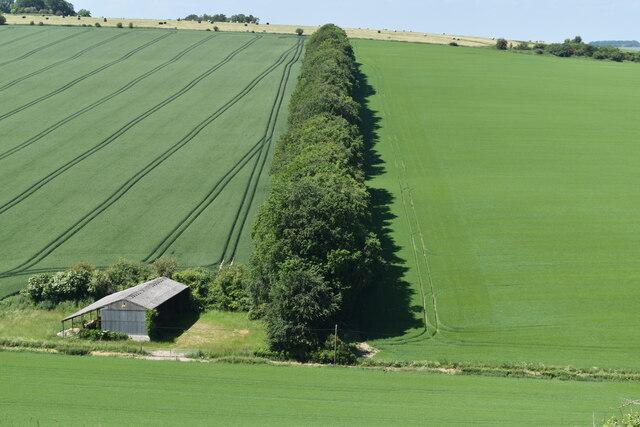 Line of trees seen across Penning Bottom