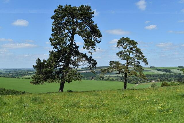 Trees on Hadden Hill