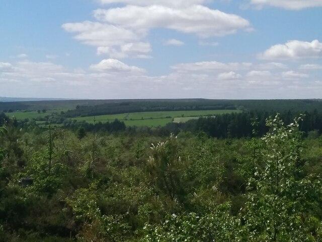 Wrelton Moor