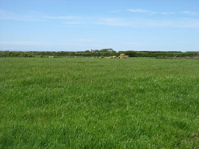 Fields east of Cwyrtai Farm
