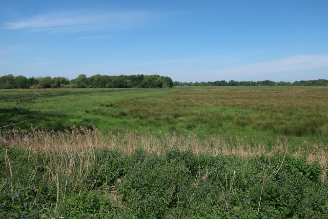 Wet grassland by the Wissey