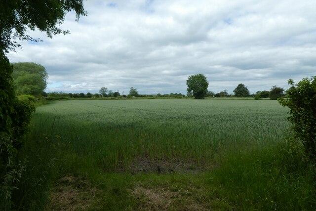 Field and railway