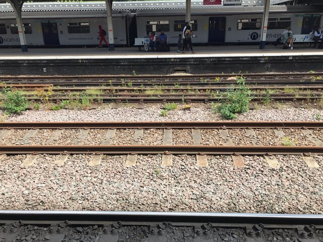 The rewilding of Sheffield Station?